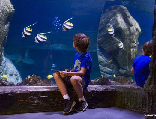 sea-life-munich-citytourcard-munich-muenchen-olympiapark-sealife